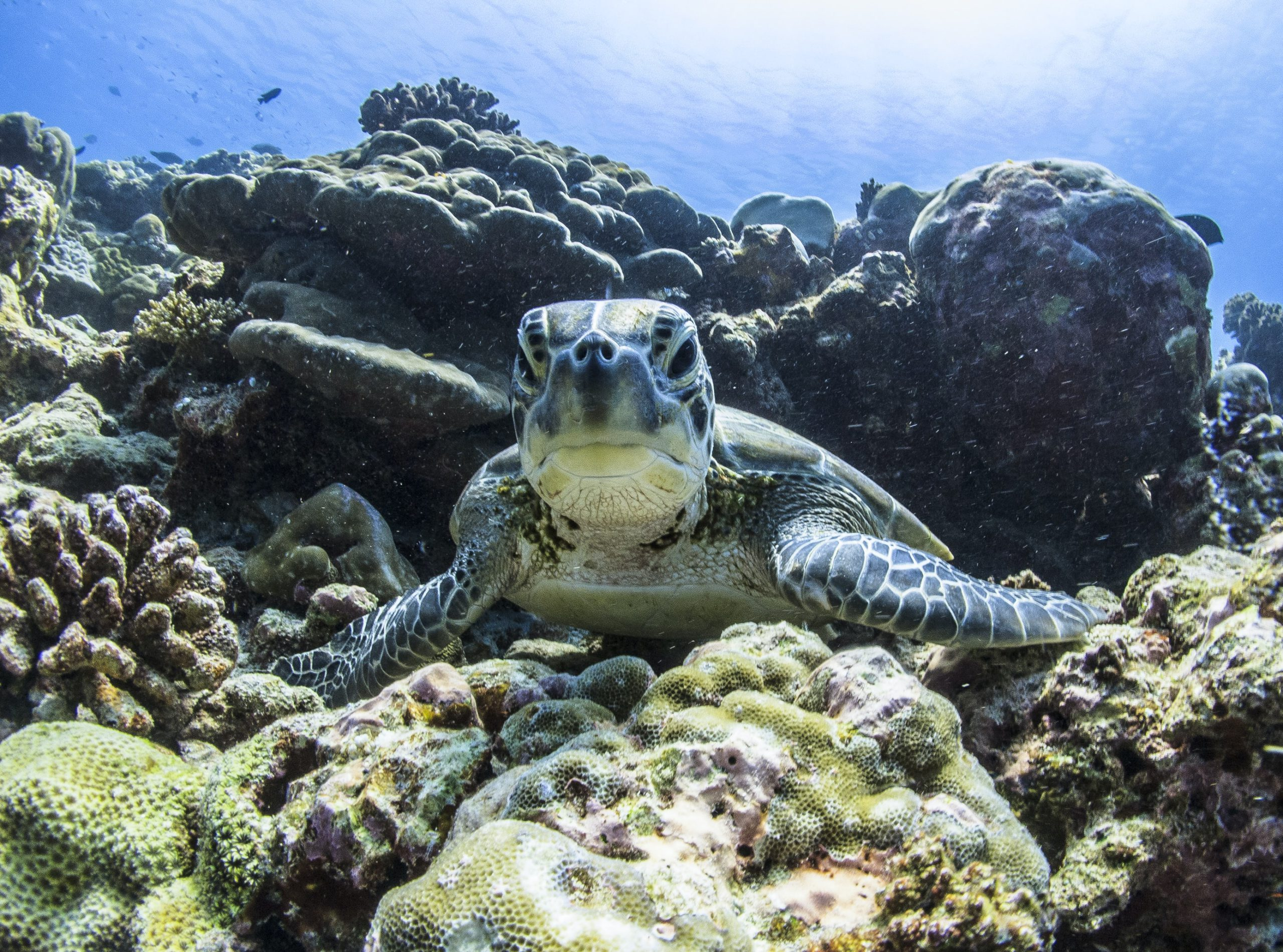 Célébrer de belles initiatives qui protègent les océans en voiture électrique